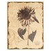 "Antiqued Floral Wall Art - 15.75"" x 11.75"""