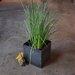 <strong>Tatami Planter</strong> by Sarabi Studio