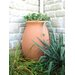 Algreen Agua Rain Water and Storage System with 50 Gallon Capacity