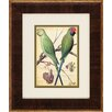 <strong>Propac Images</strong> Parrots 2 Piece Framed Graphic Art Set