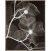 Propac Images Dogwood Blossoms Negative Framed Wall Art