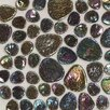 "<strong>Daltile</strong> Glass Pebbles 10"" x 10"" Decorative Accent in Shell Iridescent"