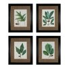 Sterling Industries Oak Leaves 4 Piece Framed Graphic Art Set