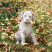 OrlandiStatuary Animals Lab Puppy Outdoor Statue