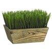 Tori Home Grass in Wood Planter