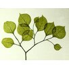 Moe's Home Collection Leaf 2 Painting Print on Canvas in Green