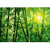 <strong>Brewster Home Fashions</strong> Ideal Decor Bamboo Forest Wall Mural
