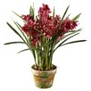 <strong>Winward Designs</strong> Cymbidium Orchid in Pot