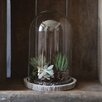 Creative Co-Op Decorative Glass Cloche with Cement Base (Set of 2)