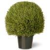 National Tree Co. Cedar Desk Top Plant in Pot