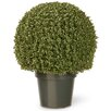 National Tree Co. Boxwood Mini Ball Desk Top Plant in Pot