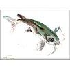 Americanflat Fish 3 by Suren Nersisyan Painting Print