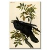 Buyenlarge Raven Graphic Art on Canvas
