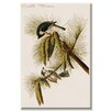 Buyenlarge 'Crested Titmouse' Graphic Art on Canvas