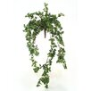 <strong>Distinctive Designs</strong> DIY Foliage Mini Boxwood Bush Hanging Plant (Set of 6)