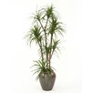 "<strong>Distinctive Designs</strong> 78"" Dracaena Marginata Tree in Tall Metallic Earthenware Water Jar"