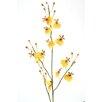 Distinctive Designs DIY Flower Oncidium Orchid (Set of 12)
