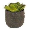 Creative Branch Faux Echeveria Desk Top Plant in Pot