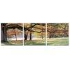 Artistic Bliss Fall Tree 3 Piece Photographic Print Set