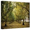 <strong>Art Wall</strong> ''Fall Orchard'' by Kathy Yates Photographic Print on Canvas