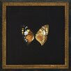 Melissa Van Hise Butterflies VI Framed Art