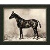 Melissa Van Hise Horse I Framed Photographic Print