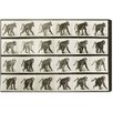 Oliver Gal Baboon in Motion Photographic Print on Canvas