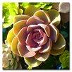 "Trademark Fine Art ""Succulent Pond VI"" by Amy Vangsgard Painting Print on Canvas"