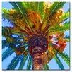 """Trademark Fine Art """"Palm Tree Looking Up"""" by Amy Vangsgard Painting Print on Canvas"""
