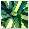 """<strong>Trademark Fine Art</strong> """"Succulent Square VI"""" by Amy Vangsgard Painting Print on Canvas"""