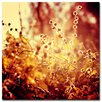 """<strong>Trademark Fine Art</strong> """"Sunset in My Garden"""" by Beata Czyzowska Young Photographic Print on Canvas"""