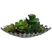 Laura Ashley Home Succulents Desk Top Plant in Planter