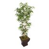 Laura Ashley Home Tall Bamboo Tree in Urn