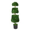 <strong>Laura Ashley Home</strong> Preserved Boxwood Cone Round Topiary in Pot