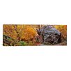 iCanvas Panoramic Big Boulder in a Forest, Stowe, Lamoille County, Vermont Photographic Print on Canvas