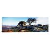 <strong>iCanvasArt</strong> Panoramic Bare Tree Near Rocks, Haytor Rocks, Dartmoor, Devon, England Photographic Print on Canvas
