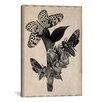 iCanvas Butterflies Scientific Drawing Graphic Art on Canvas