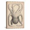 iCanvas 'Cephalopoda of the Hawaiian Islands' by Stillman Graphic Art on Canvas