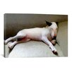 iCanvas 'Bull Terrier' by Michael Tompsett Painting Print on Canvas
