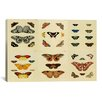 <strong>iCanvasArt</strong> 'Butterflies 9 Piece Plate Collection I' by Cramer and Stoll Graphic Art on Canvas