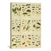 <strong>'Butterflies 9 Piece Plate Collection II' by Cramer and Stoll Graph...</strong> by iCanvasArt