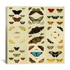 "<strong>iCanvasArt</strong> ""Butterflies 9 Piece Plate Collection IV"" Canvas Wall Art by Cramer and Stoll"