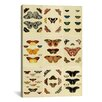 iCanvas 'Butterflies 9 Piece Plate Collection VI' by Cramer and Stoll Graphic Art on Canvas