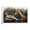 iCanvas 'Black-Crowned Night Heron or Qua Bird' by John James Audubon Painting Print on Canvas