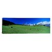 iCanvas Panoramic Cattle Graze in Alps Wilder Kaiser Going Austria Photographic Print on Canvas
