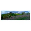 <strong>iCanvasArt</strong> Panoramic Bluebell Flowers in a Field, Cleveland, North Yorkshire, England, United Kingdom Photographic Print on Canvas