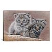 iCanvas 'Bobcat Babies' by Pip McFarry Graphic Art on Canvas