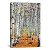 "iCanvasArt Scenic ""Autumn in Aspen"" Photographic Print on Canvas"