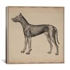 "iCanvas ""Anatomy of Lymph Vessels in Dog"" Canvas Wall Art by Hermann Baum"