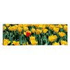 iCanvas Panoramic Tulips in a Field Photographic Print on Canvas in Yellow